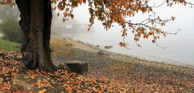 tardes-de-otoño